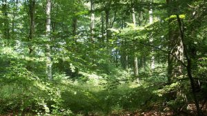 Löwenburg forests in spring