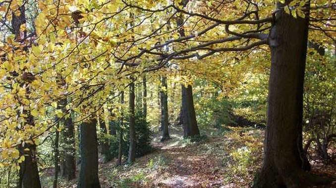 Löwenburg, autumn forest